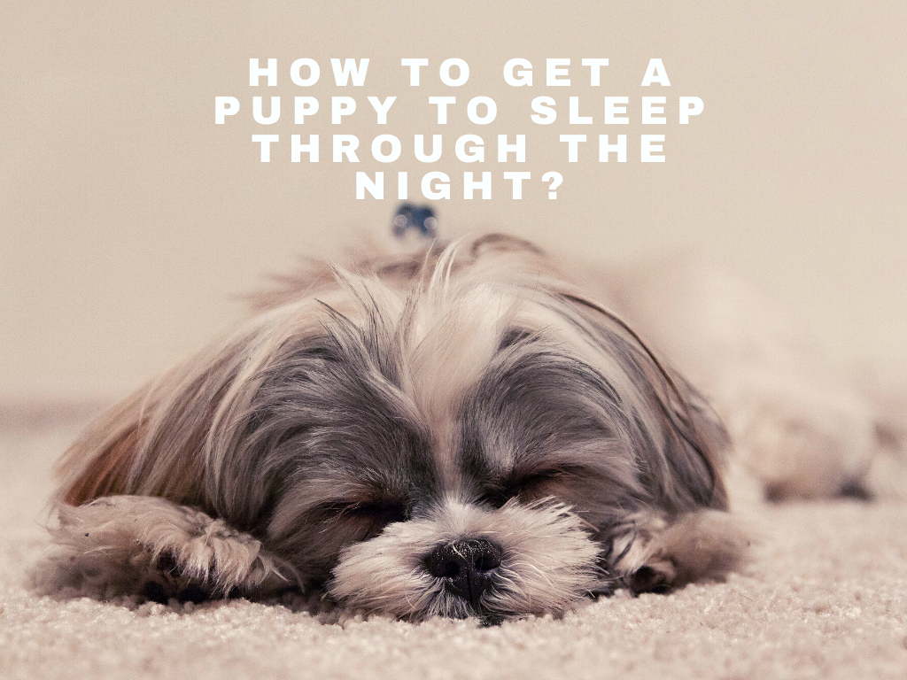 How to Get a Puppy to Sleep Through the Night?