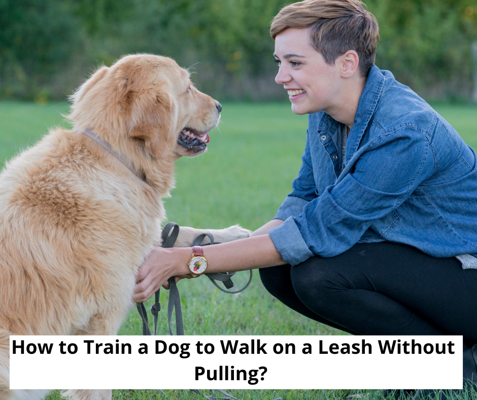 How to Train a Dog to Walk on a Leash Without Pulling?