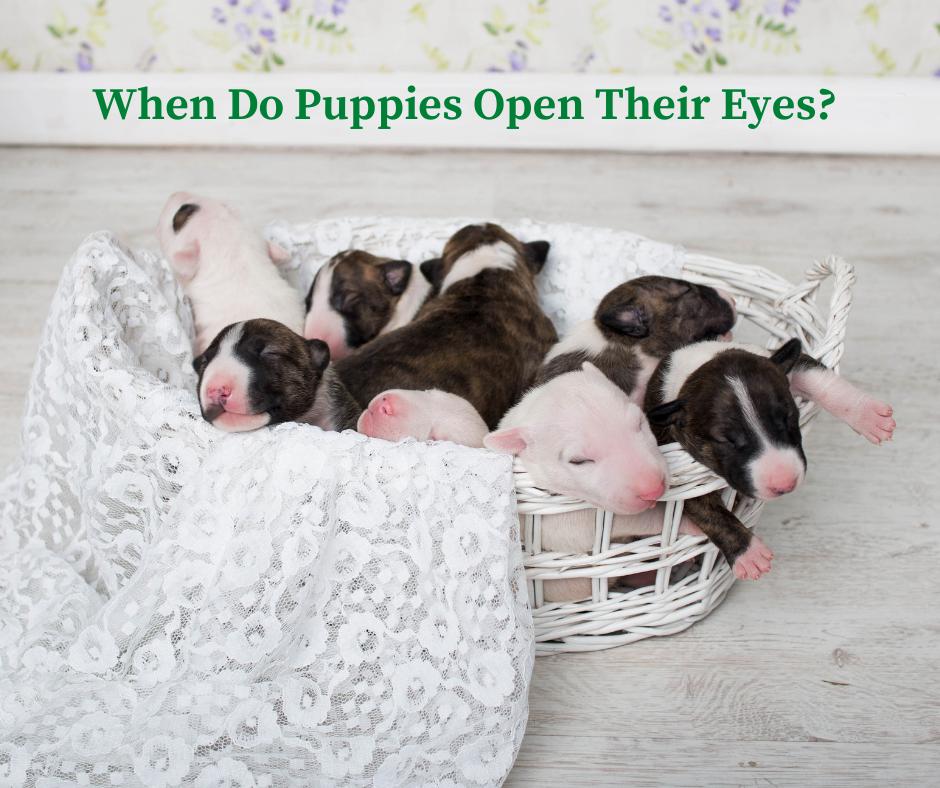 When Do Puppies Open Their Eyes?